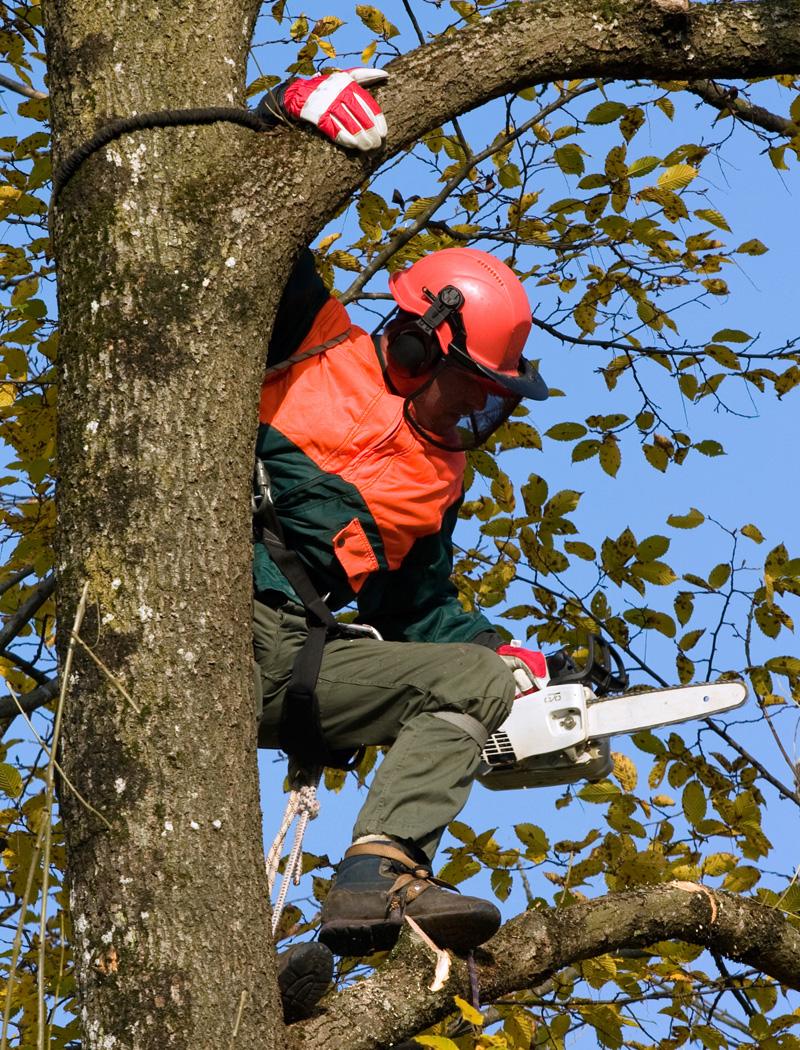 Tree worker