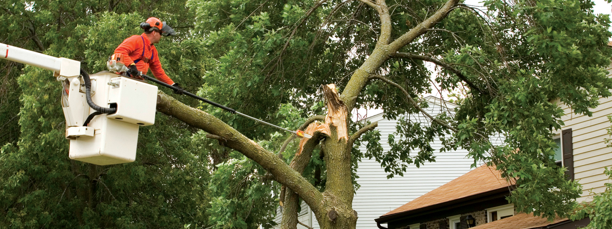 Tree worker safety materials